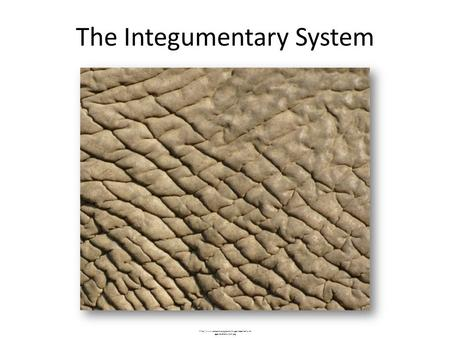 The Integumentary System  ages/anatomy/skin.jpg.