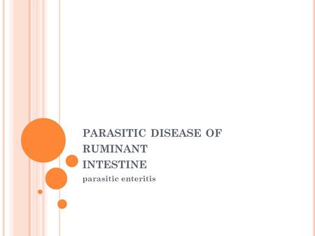 PARASITIC DISEASE OF RUMINANT INTESTINE parasitic enteritis.