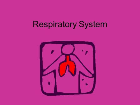 Respiratory System. Parts Lungs Air passages Functions Takes in oxygen Removes carbon dioxide Body has 4-6 minute supply of oxygen.