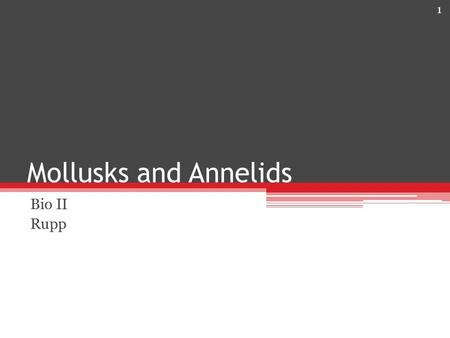 Mollusks and Annelids Bio II Rupp.