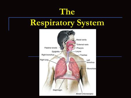 The Respiratory System. 2.05 Remember the structures of the respiratory system 2  nce/health-and-human-body/human-