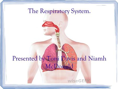 The Respiratory System. Presented by Toni Davis and Niamh McDonald.