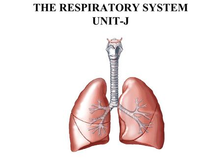 THE RESPIRATORY SYSTEM UNIT-J. Objectives: 1. Describe the structure of the Respiratory System 2. Analyze the function of the Respiratory System 3. Identify.