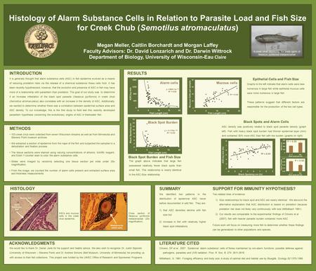 Histology of Alarm Substance Cells in Relation to Parasite Load and Fish Size for Creek Chub (Semotilus atromaculatus) Megan Meller, Caitlin Borchardt.
