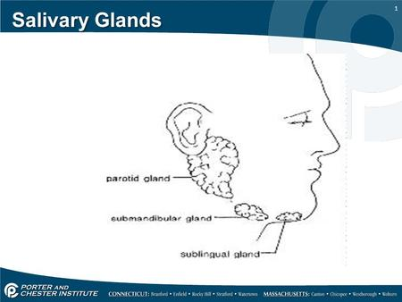 1 Salivary Glands. 2 MAJOR SALIVARY GLANDS SUPPLY SECRETION TO THE ORAL CAVITY  Serous Glands- secrete serum (which is a clear liquid 90% water)  Mucous.