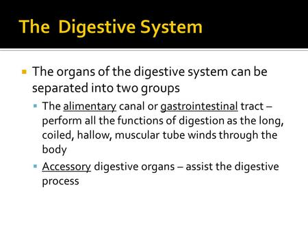 The Digestive System The organs of the digestive system can be separated into two groups The alimentary canal or gastrointestinal tract – perform all.