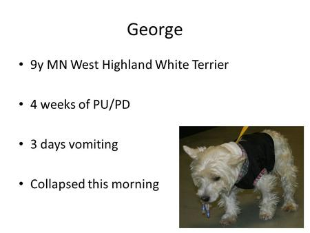 George 9y MN West Highland White Terrier 4 weeks of PU/PD 3 days vomiting Collapsed this morning.