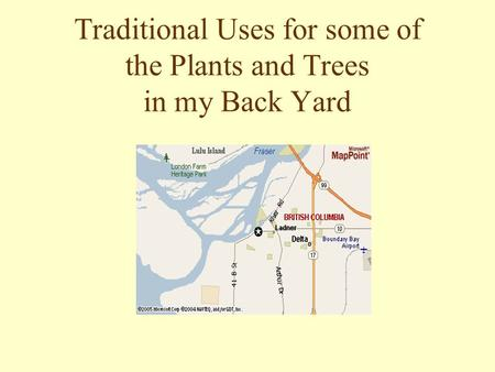 Traditional Uses for some of the Plants and Trees in my Back Yard.