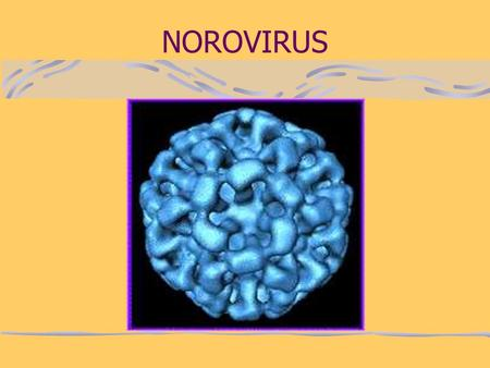 NOROVIRUS. What are Noroviruses? Noroviruses are a group of viruses that are the most common cause of gastroenteritis (stomach bugs) in England and Wales.