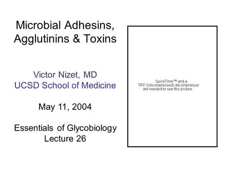 Microbial Adhesins, Agglutinins & Toxins Victor Nizet, MD UCSD School of Medicine May 11, 2004 Essentials of Glycobiology Lecture 26.