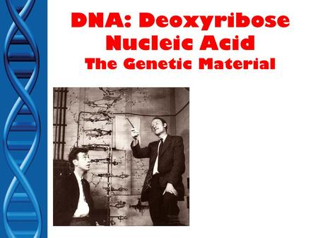 DNA: Deoxyribose Nucleic Acid The Genetic Material.