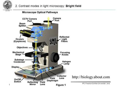 IPC Friedrich-Schiller-Universität Jena 1  2. Contrast modes in light microscopy: Bright field.