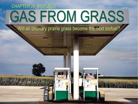 GAS FROM GRASS Will an ordinary prairie grass become the next biofuel? CHAPTER 29 BIOFUELS.