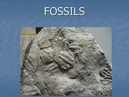 FOSSILS. Think About It... Can you name any dinosaurs? Do you know what they looked like or how they moved? Scientists have been able to tell us many.