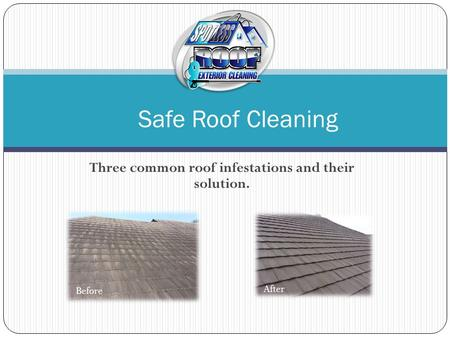 Three common roof infestations and their solution. Safe Roof Cleaning Before After.