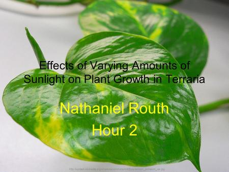 Effects of Varying Amounts of Sunlight on Plant Growth in Terraria Nathaniel Routh Hour 2
