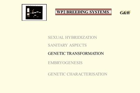 SEXUAL HYBRIDIZATION SANITARY ASPECTS GENETIC TRANSFORMATION EMBRYOGENESIS GENETIC CHARACTERISATION G&H WP2 BREEDING SYSTEMS.