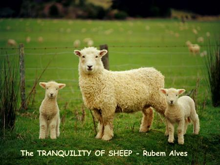 The TRANQUILITY OF SHEEP - Rubem Alves The night was dark, the sky had no stars. Occasionally we could hear the howling of a wolf from distance, mixed.