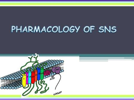 PHARMACOLOGY OF SNS.