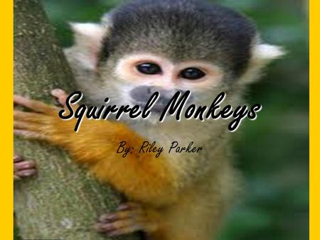 Squirrel Monkeys By: Riley Parker