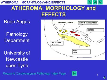 ATHEROMA: MORPHOLOGY and EFFECTS