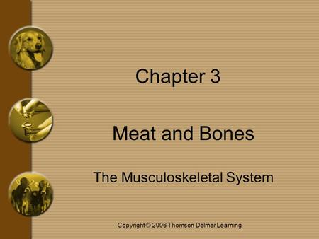Copyright © 2006 Thomson Delmar Learning Chapter 3 Meat and Bones The Musculoskeletal System.