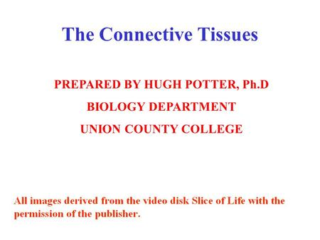 PREPARED BY HUGH POTTER, Ph.D BIOLOGY DEPARTMENT UNION COUNTY COLLEGE The Connective Tissues.