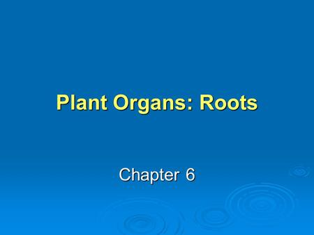 Plant Organs: Roots Chapter 6. KEY TERMS TAPROOT SYSTEM TAPROOT SYSTEM A root system consisting of one prominent main root with smaller lateral roots.