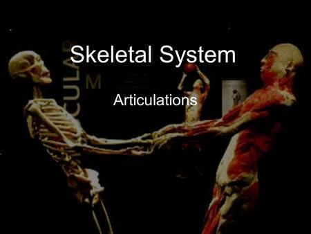 Skeletal System Articulations. Articulation (joint): a point of contact between bones. Some allow movement, others are immovable (sutures). Most joints.