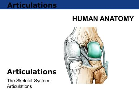 The Skeletal System: Articulations