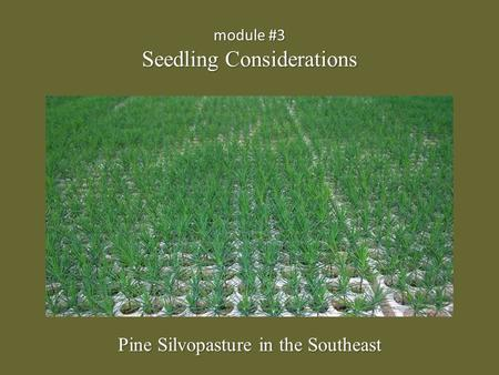 Module #3 Seedling Considerations Pine Silvopasture in the Southeast.