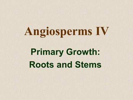 Angiosperms IV Primary Growth: Roots and Stems. Roots and Root Systems Root Systems are often classified as either: –TAP ROOT SYSTEMS (found most commonly.