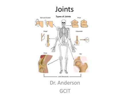 Joints Dr. Anderson GCIT. Joints Where two or more bones meet Function – Connection (ligaments) – Movement (muscles) – Protection (joint capsule)