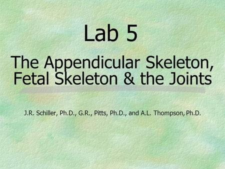 Lab 5 The Appendicular Skeleton, Fetal Skeleton & the Joints J.R. Schiller, Ph.D., G.R., Pitts, Ph.D., and A.L. Thompson, Ph.D.