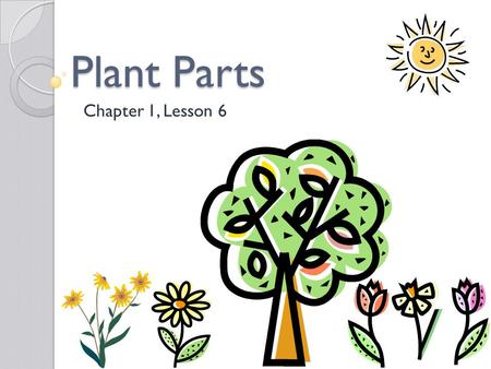 Plant Parts Chapter 1, Lesson 6. Objectives Students will: Explore the role of leaves on plants. Describe the structures and functions of roots, stems,