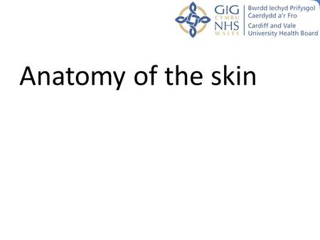 Anatomy of the skin. Aims and objectives To understand the underlying structures of the skin To gain a basic understanding of the process of wound healing.