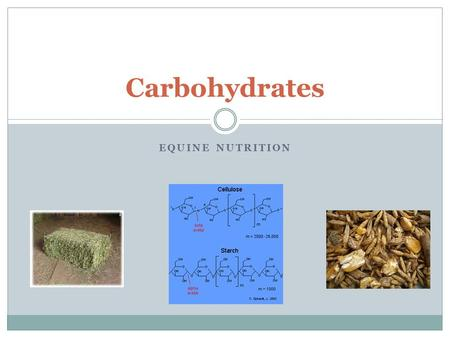 Carbohydrates Equine Nutrition.