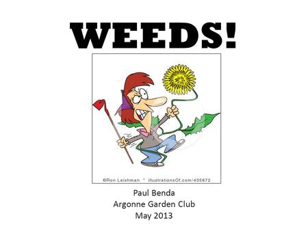 WEEDS! Paul Benda Argonne Garden Club May 2013. 2 Or rather… The cons outweigh the uses.