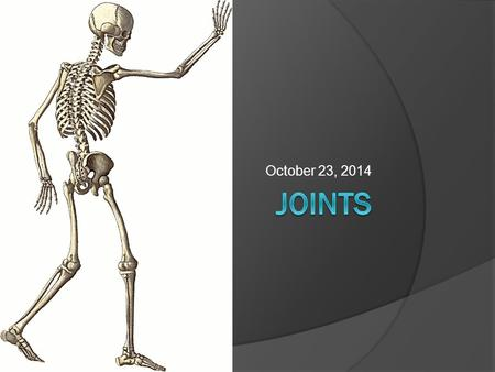 October 23, 2014. Joints  Joints occur where two or more bones join together, or articulate  Functions: Hold bones together Allow motion  The structure.