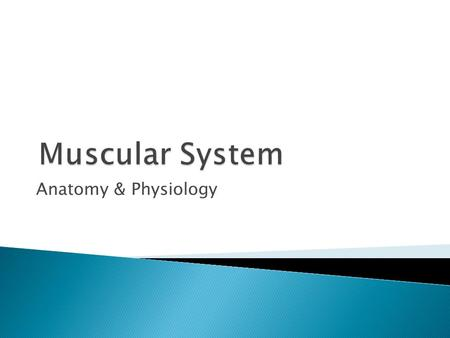 Muscular System Anatomy & Physiology.