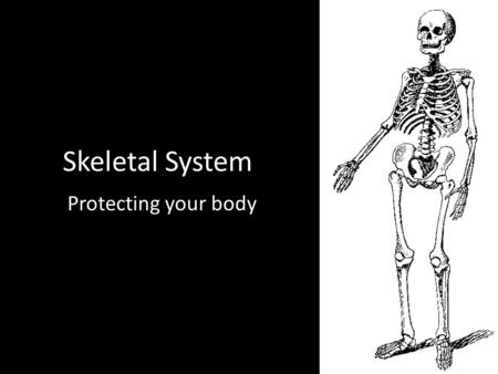 Skeletal System Protecting your body. Skeletal System System of bones and cartilage protecting your body and your vital organs while producing and storing.