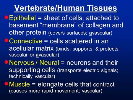 "Vertebrate/Human Tissues  Epithelial = sheet of cells; attached to basement ""membrane"" of collagen and other protein (covers surfaces; avascular)  Connective."