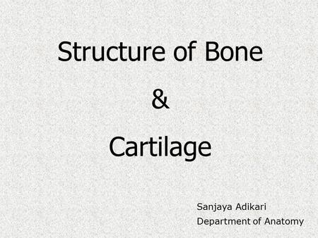 Structure of Bone & Cartilage Sanjaya Adikari Department of Anatomy.