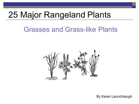 Grasses and Grass-like Plants 25 Major Rangeland Plants By Karen Launchbaugh.