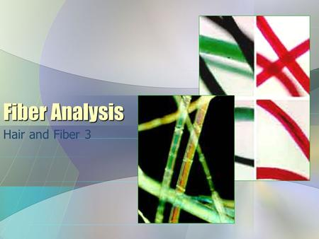 Fiber Analysis Hair and Fiber 3.