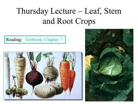 Thursday Lecture – Leaf, Stem and Root Crops Reading: Textbook, Chapter 7.