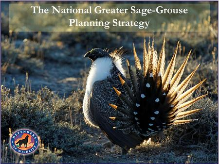 The National Greater Sage-Grouse Planning Strategy.