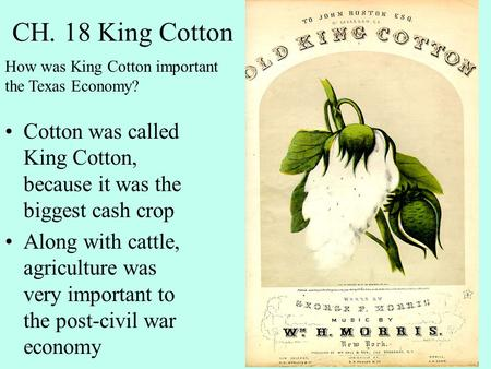 CH. 18 King Cotton Cotton was called King Cotton, because it was the biggest cash crop Along with cattle, agriculture was very important to the post-civil.