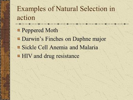 Examples of Natural Selection in action Peppered Moth Darwin's Finches on Daphne major Sickle Cell Anemia and Malaria HIV and drug resistance.