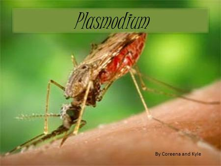 Plasmodium By Coreena and Kyle. What is Malaria The disease How people get Malaria Symptoms Causes Life cycle Who is at risk Complications Prevention.